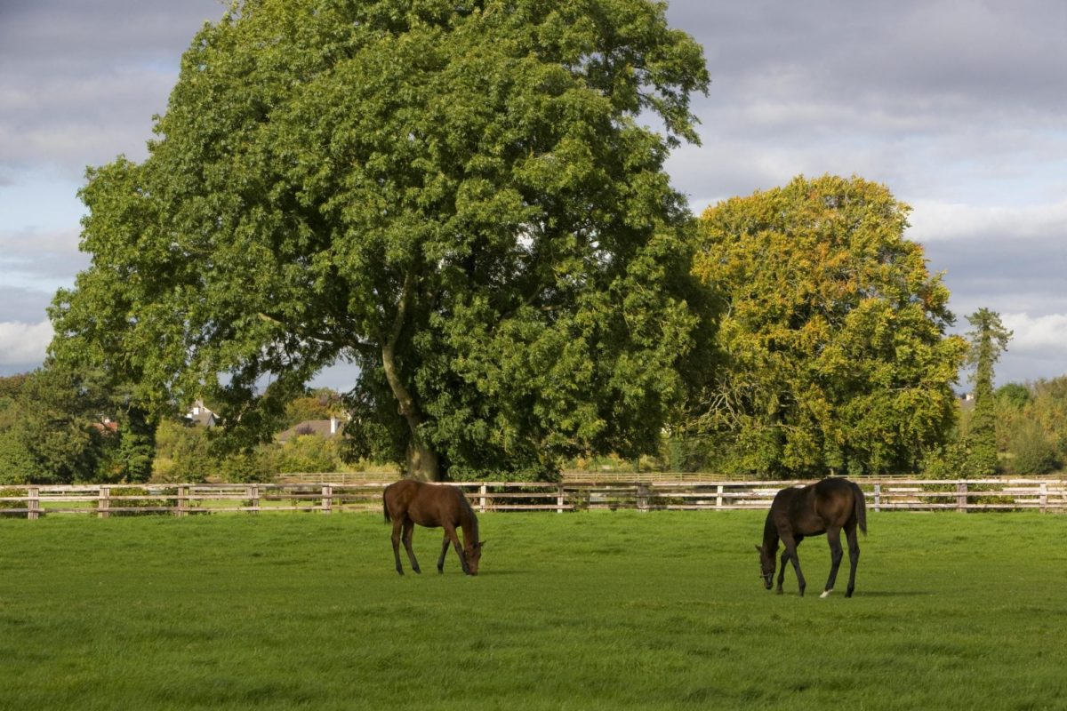 Irish National Stud: Things To See And Do In Kildare